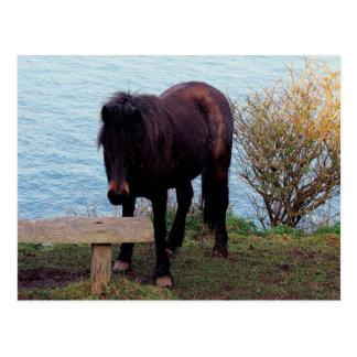 ベンチのデボンの海岸のDartmoorの南子馬 ポストカード
