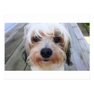ベンチの郵便はがきのかわいい犬 ポストカード