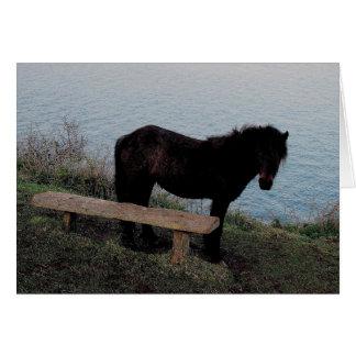 ベンチ.3.の近くのデボンの海岸のDartmoorの南子馬 カード
