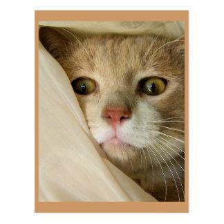 ベージュおよびピンク猫 ポストカード