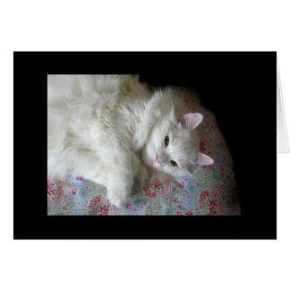 ペイズリーのキルトカードの白い猫 グリーティングカード
