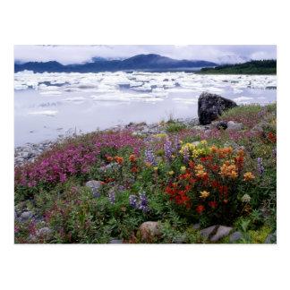 ペイントブラシ、Lupine、Fireweed。 氷山ラッセル ポストカード