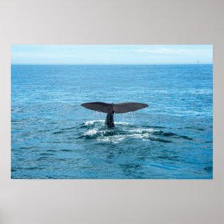 ペットおよび他の動物-クジラのひれ ポスター