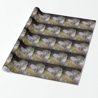 ペットラットのダンカンの包装紙 包装紙