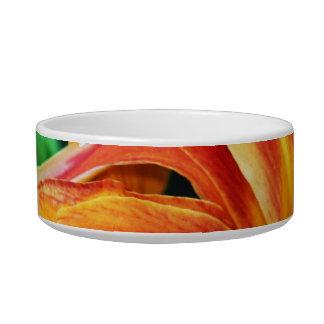 ペット皿の上のオレンジワスレグサの花の終わり 猫用水皿