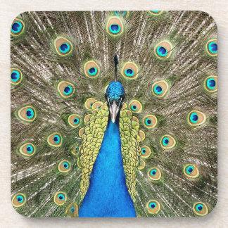 ペドロの孔雀はカラフルな野生の鳥のクジャクに羽をつけます コースター