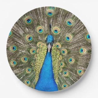 ペドロの孔雀はカラフルな野生の鳥のクジャクに羽をつけます ペーパープレート
