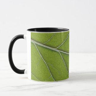 ペパーミントの葉のマクロ写真撮影 マグカップ