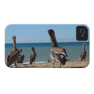 ペリカンのビーチののらくら者 Case-Mate iPhone 4 ケース