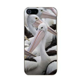 ペリカンのポッド メタリックiPhone SE/5/5sケース