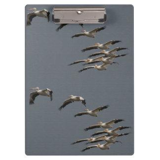 ペリカンの鳥の野性生物動物のビーチの海 クリップボード