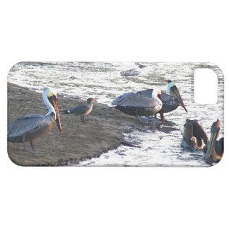 ペリカンの鳥の野性生物動物のビーチの海 iPhone SE/5/5s ケース