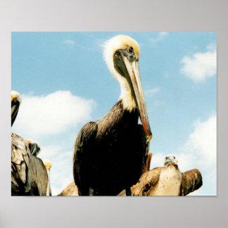 ペリカン家族のKey Westフロリダの野性生物の鳥の芸術 ポスター