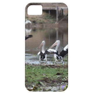 ペリカン田園クイーンズランドオーストラリア iPhone SE/5/5s ケース