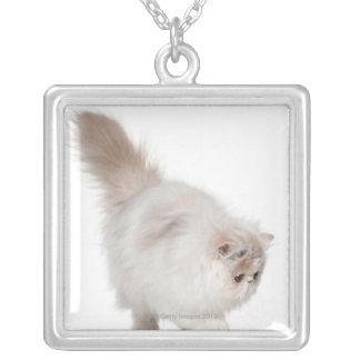 ペルシャの子ネコ(3か月古い) シルバープレートネックレス