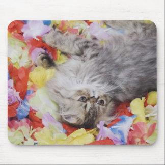 ペルシャ、ネコ属のcatus、ブラウンの虎猫、子ネコ、2 マウスパッド