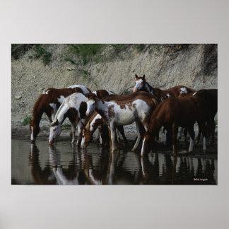 ペンキの馬の飲むこと ポスター