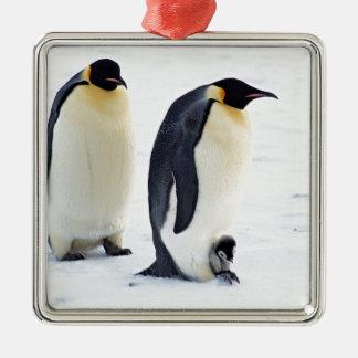 ペンギンによって凍っていられている氷の雪の鳥の天候かわいい動物 メタルオーナメント