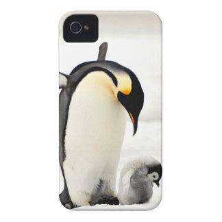 ペンギンの写真のiphone 4ケース Case-Mate iPhone 4 ケース
