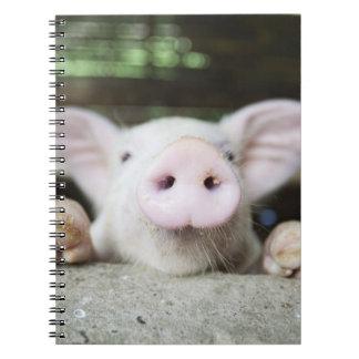 ペン、コブタのベビーのブタ ノートブック