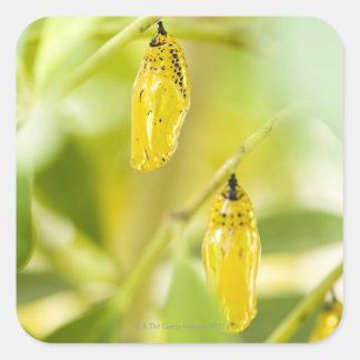 ペーパー凧の蝶、沖縄の繭 スクエアシール