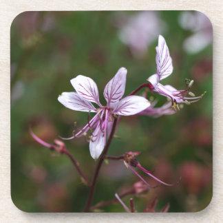 ホウキグサの花 コースター