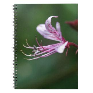 ホウキグサの花 ノートブック