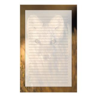 ホッキョクギツネ、1002沿岸2のAlopexのlagopus、 便箋