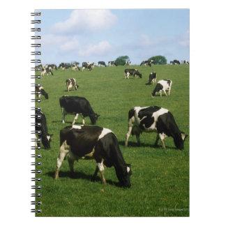 ホルスタインの牛、アイルランド ノートブック
