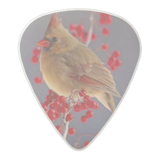 ホーソーンの中のメスの北の(鳥)ショウジョウコウカンチョウ アセタール ギターピック