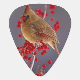 ホーソーンの中のメスの北の(鳥)ショウジョウコウカンチョウ ギターピック