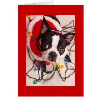 ボストンテリアのクリスマスの照明のサンタの挨拶車 カード