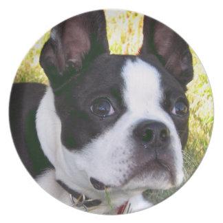 ボストンテリアの子犬のプレート プレート