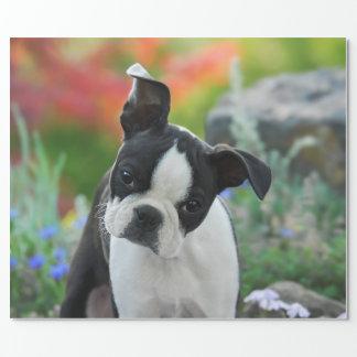 ボストンテリア犬のかわいい子犬のポートレート、ギフト ラッピングペーパー