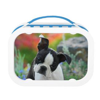 ボストンテリア犬の子犬のお弁当箱 ランチボックス