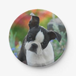 ボストンテリア犬の子犬のポートレート、パーティ ペーパープレート