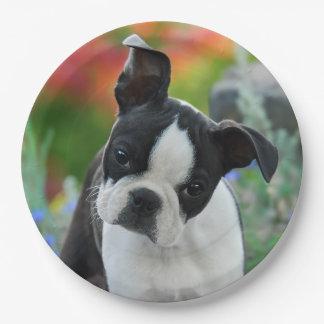 ボストンテリア犬の子犬のポートレート、幸せなパーティ ペーパープレート