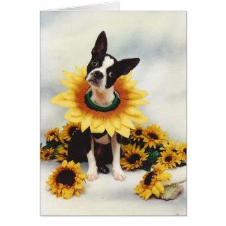 ボストンブルテリア犬 カード