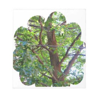 ボストン米国アメリカ緑の自然の写真撮影 ノートパッド