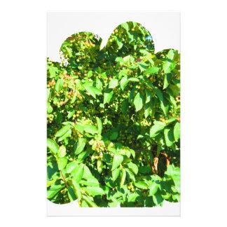 ボストン米国アメリカ緑の自然の写真撮影 便箋