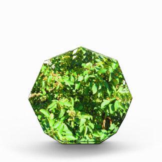 ボストン米国アメリカ緑の自然の写真撮影 表彰盾