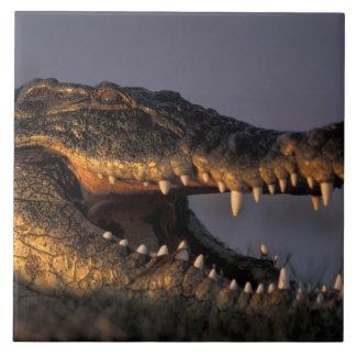 ボツワナのChobeの国立公園、ナイルのワニ タイル