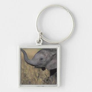 ボツワナのChobeの国立公園、若い象 キーホルダー