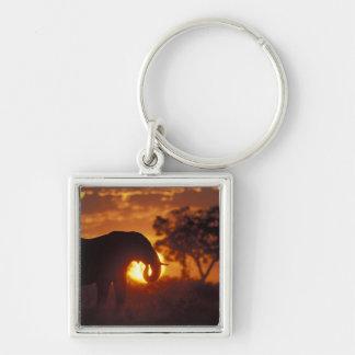 ボツワナのChobeの国立公園、雄象 キーホルダー