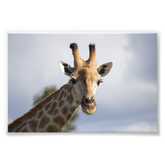 ボツワナ、アフリカの写真のプリントのキリン フォトプリント