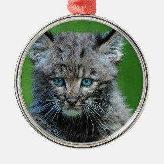 ボブキャットは水の美しい野生猫を注目します メタルオーナメント