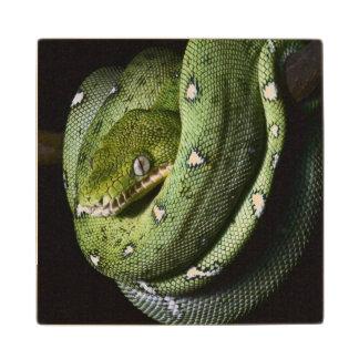ボリビアの緑の木のヘビのエメラルドのボア ウッドコースター