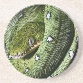 ボリビアの緑の木のヘビのエメラルドのボア サンドストーンコースター