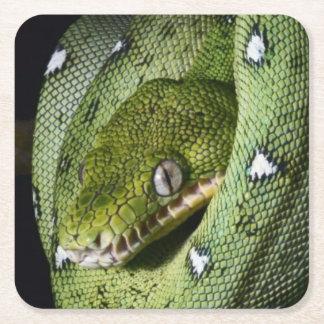 ボリビアの緑の木のヘビのエメラルドのボア スクエアペーパーコースター