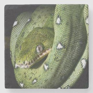 ボリビアの緑の木のヘビのエメラルドのボア ストーンコースター